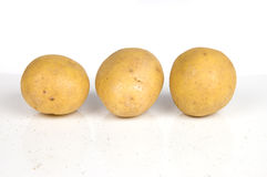 Three potatoes isolated on white. Three clean yellow potatoes in a row isolated on white background with natural shadow Stock Photos