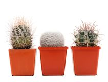 Three pots with cactuses on a white isolated background stock photography