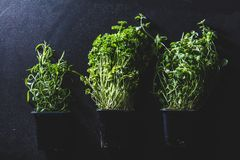 Three pots with different herbs on black background Stock Image