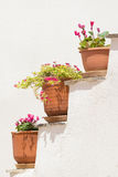 Three pots with flowers against a white wall. Royalty Free Stock Photography