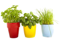 Three pots of herbs royalty free stock photography
