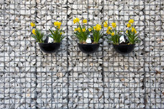 Three pots with yellow narcissus hanging on the white wall Royalty Free Stock Photos