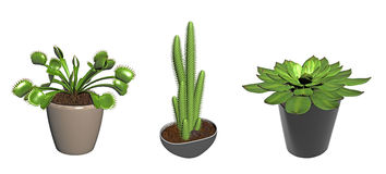 Three potted cactus plants Stock Images