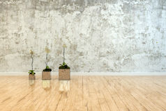 Three potted orchids on a polished wood floor Stock Images