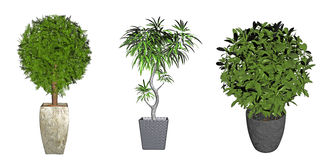 Three potted plants Stock Photography