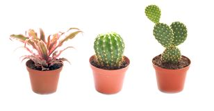 Three Potted Succulent or Cactus Isolated on White stock photos
