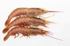 Three prawns on white Royalty Free Stock Photo