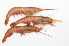 Three prawns on white. Three raw prawns  on white background Stock Image