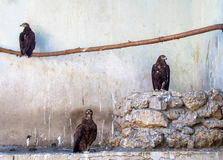 Three predator. In waiting position Royalty Free Stock Image