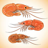 Three prepared shrimps on colorful background. Stock Image