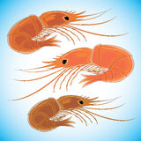 Three prepared shrimps on colorful background. Royalty Free Stock Photos