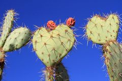 Three prickly hearts Stock Photography