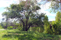 Three Pronged Tree. A tree with three trunks covers a red bridge over the river Stock Photos