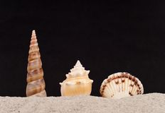 Three Protruding Shells on Sand Stock Photos