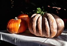 Three pumkins on the table Royalty Free Stock Photos