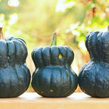 Three pumpkinks Royalty Free Stock Photos