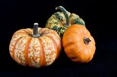 Three pumpkins. Colored pumpkins on black background Stock Photo