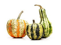 Three pumpkins Stock Photography
