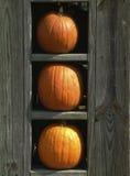 Three pumpkins. In a vertical wooden frame stock photos