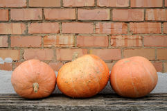 Three pumpkins on a bench Royalty Free Stock Photos
