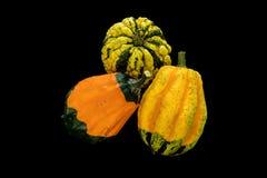 Three pumpkins on black backgroud Stock Photo