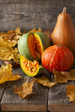 Three pumpkins of different colors Royalty Free Stock Image