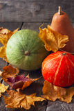 Three pumpkins of different colors Stock Image