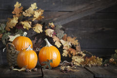 Three Pumpkins Fall Leaves Stock Photos