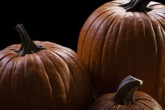 Three Pumpkins Isolated on Black Background Royalty Free Stock Photography
