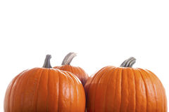 Three Pumpkins Isolated on White Background Royalty Free Stock Images