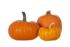 Three Pumpkins Isolated on White Background Stock Image