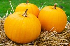 Three pumpkins on straw Royalty Free Stock Photography