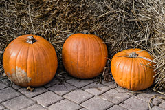 Three pumpkins Stock Photo