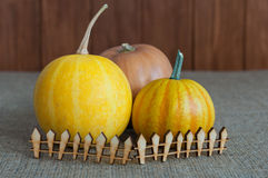 Three pumpkins of various sizes behind miniature stock images