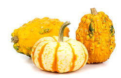 Three pumpkins on a white background Royalty Free Stock Image