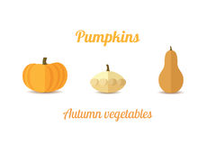 Three pumpkins. Pumpkins  on white background. Flat Design. Vector illustration Stock Photos