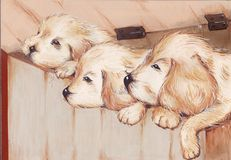 Three puppies Stock Images
