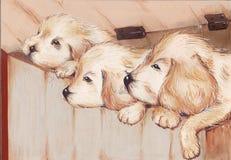 Three puppies Stock Images