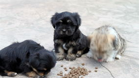Three puppies eating outside stock footage