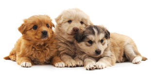 Three puppies. Three puppies on a white background royalty free stock image