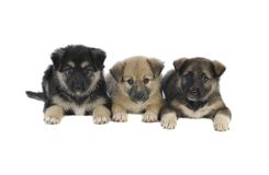 Three puppy Stock Photo