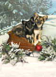 Three Pups in a Sleigh Stock Photo