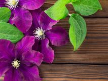 Three purple clematis flowers on the wooden planks Royalty Free Stock Images