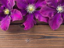 Three purple clematis flowers on the wooden planks Stock Photo