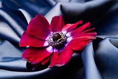 Violet flowers lie on a blue shiny silk wavy fabric. Royalty Free Stock Images