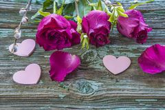 Three purple roses with waterdrops and pink hearts. On old blue paint wooden background stock photography