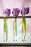 Three purple tulips in a small  glass Royalty Free Stock Photo