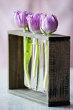 Three purple tulips in a small  glass Stock Photo