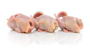 Three quail carcass on a white background Stock Image