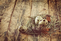 Three quail easter eggs Stock Photos